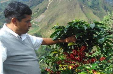 BIO - El Mango - Cajamarca, Pérou