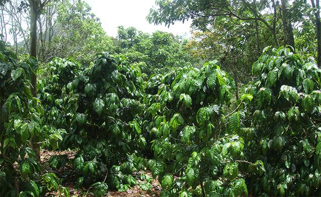 Dipilto, Nicaragua