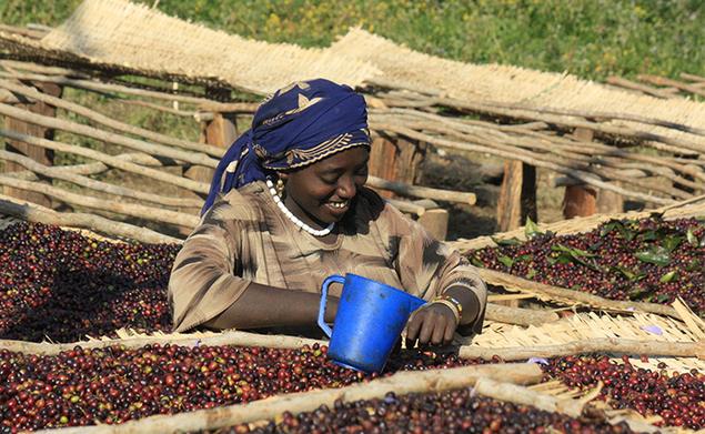 Jebena  - Walläga, Éthiopie