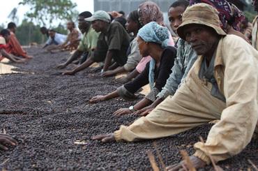 Seka - Jimma, Ethiopie