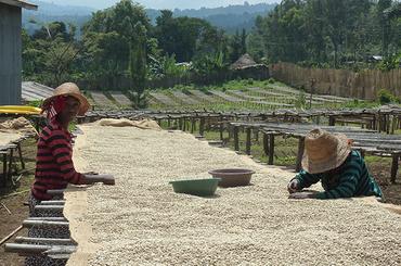 Nyala - Sidamo, Ethiopie