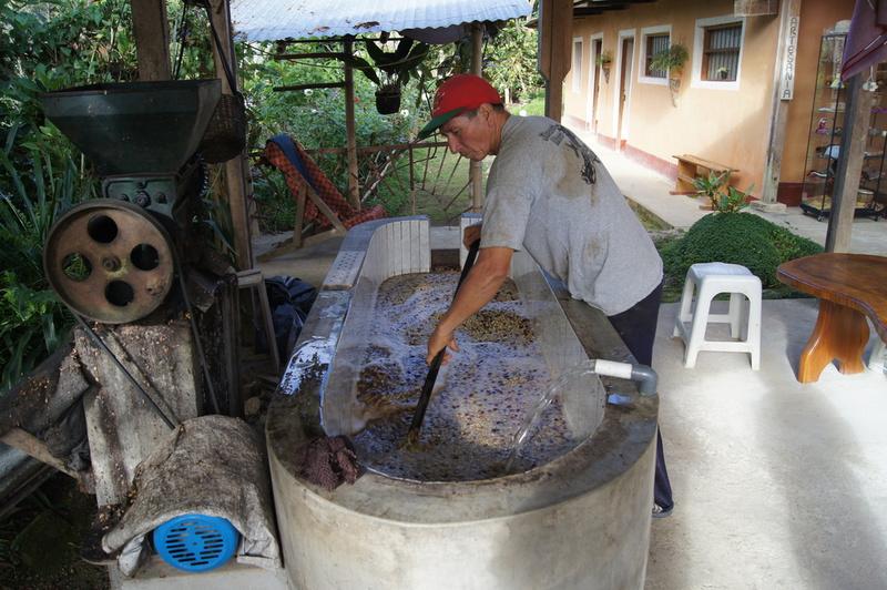 séchage de café par voie humide