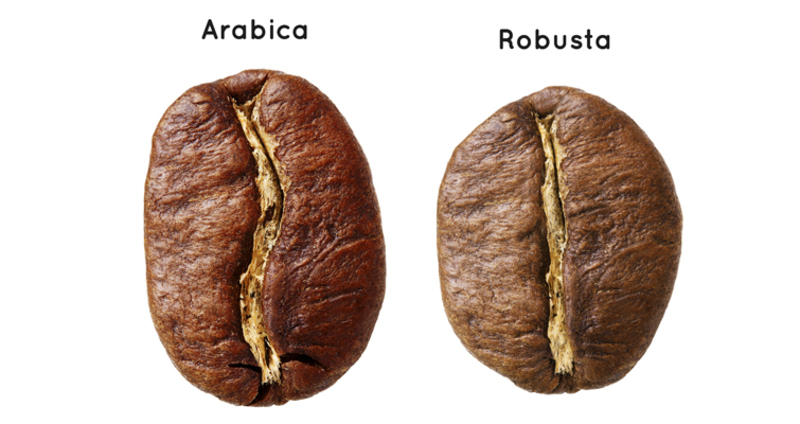 Robusta><Arabica