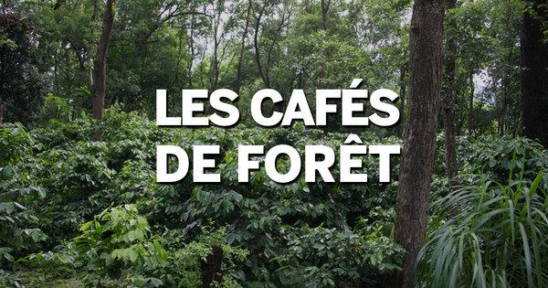Og cafes de foret