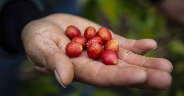 Hand and cherry